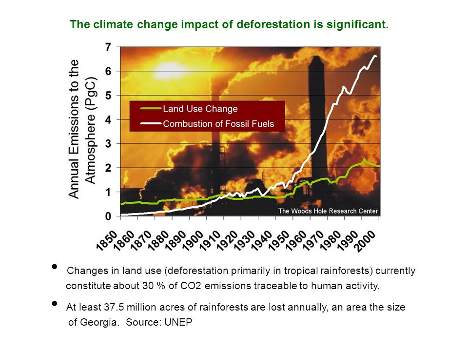 The climate change impact of deforestation is significant.