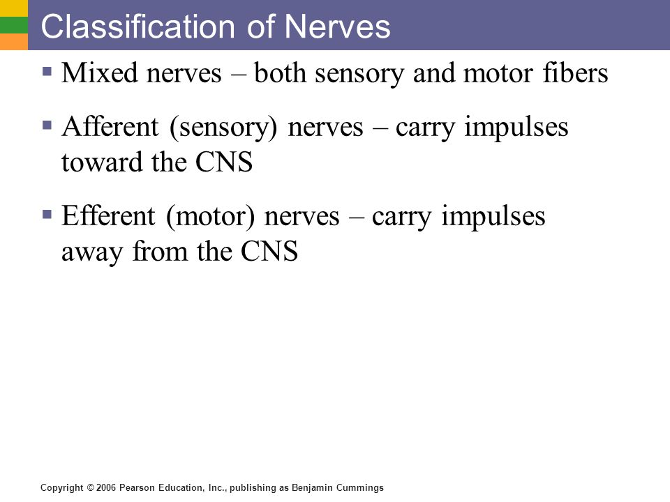 Copyright © 2006 Pearson Education, Inc., publishing as Benjamin Cummings Classification of Nerves  Mixed nerves – both sensory and motor fibers  Afferent (sensory) nerves – carry impulses toward the CNS  Efferent (motor) nerves – carry impulses away from the CNS