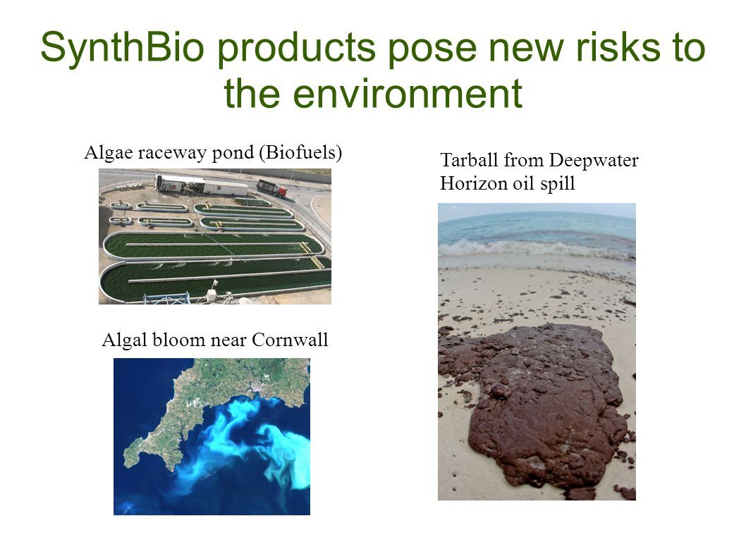 SynthBio products pose new risks to the environment Algae raceway pond (Biofuels) Algal bloom near Cornwall Tarball from Deepwater Horizon oil spill