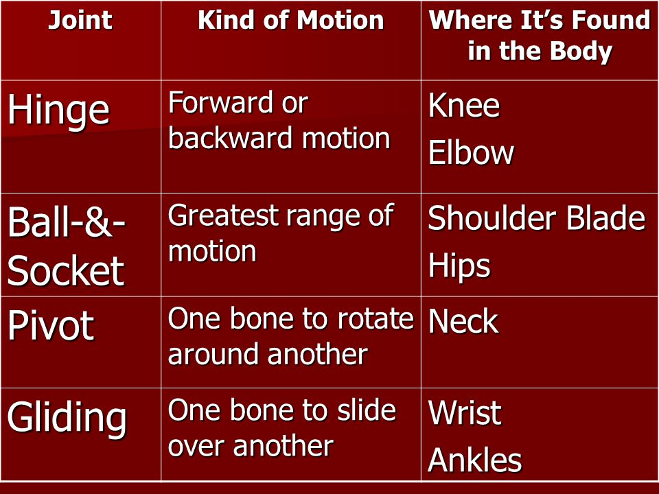 Joint Kind of Motion Where It's Found in the Body Hinge Forward or backward motion KneeElbow Ball-&- Socket Greatest range of motion Shoulder Blade Hi