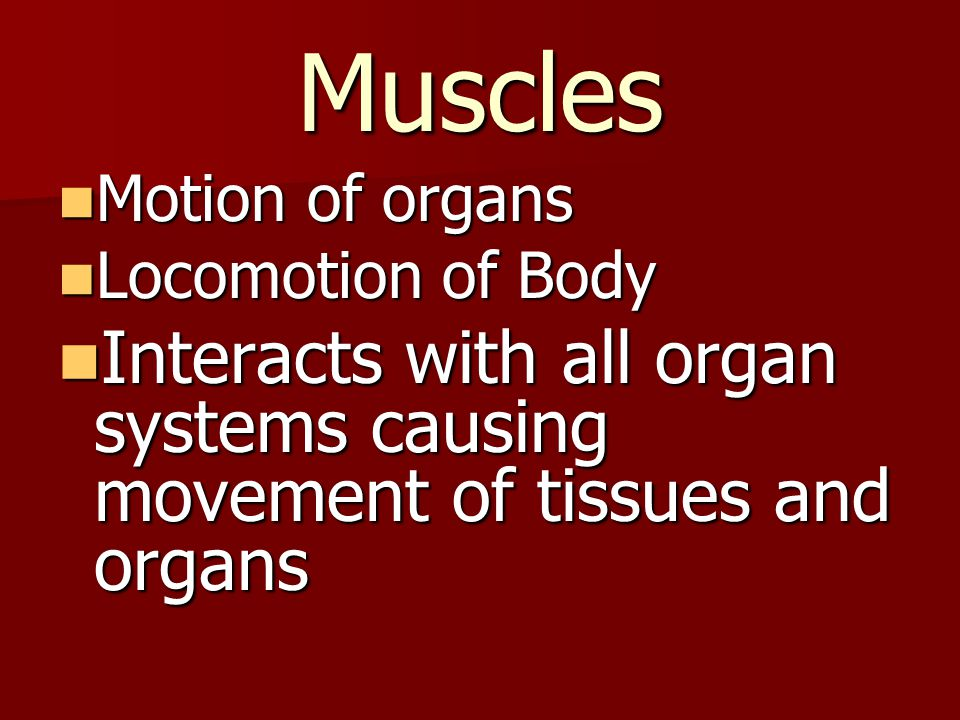 Muscles Motion of organs Motion of organs Locomotion of Body Locomotion of Body Interacts with all organ systems causing movement of tissues and organ