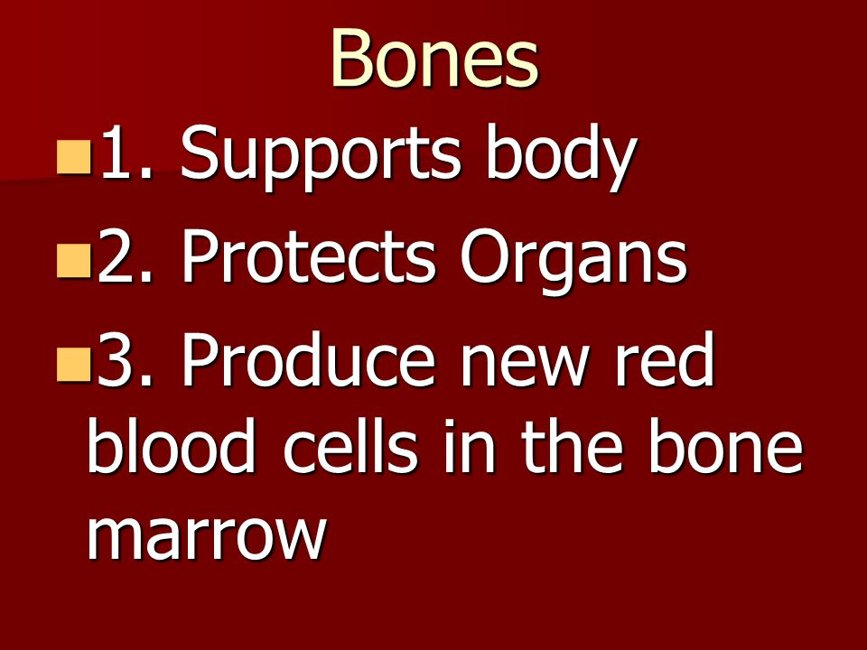 Bones 1. Supports body 1. Supports body 2. Protects Organs 2. Protects Organs 3. Produce new red blood cells in the bone marrow 3. Produce new red blo