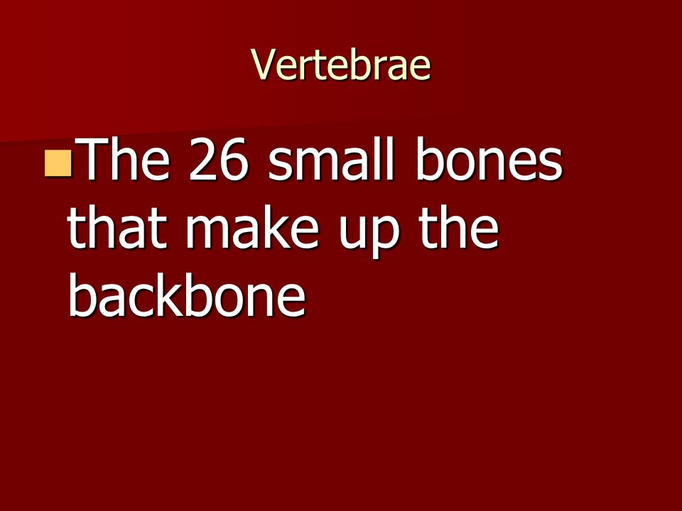 Vertebrae The 26 small bones that make up the backbone The 26 small bones that make up the backbone
