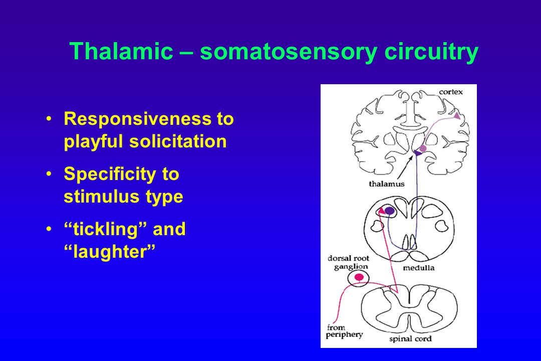 Thalamic – somatosensory circuitry Responsiveness to playful solicitation Specificity to stimulus type tickling and laughter