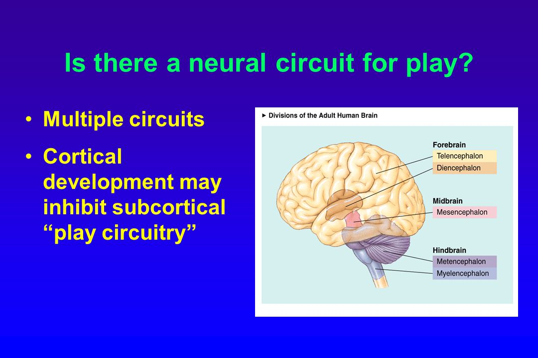 Is there a neural circuit for play.