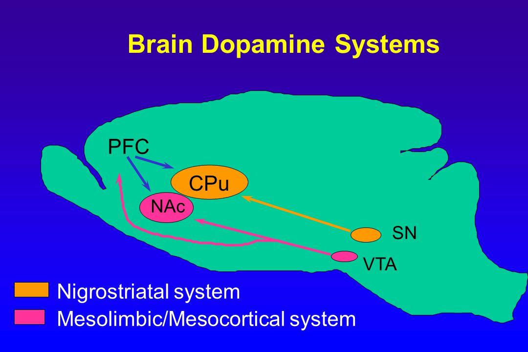 CPu NAc SN VTA PFC Brain Dopamine Systems Nigrostriatal system Mesolimbic/Mesocortical system