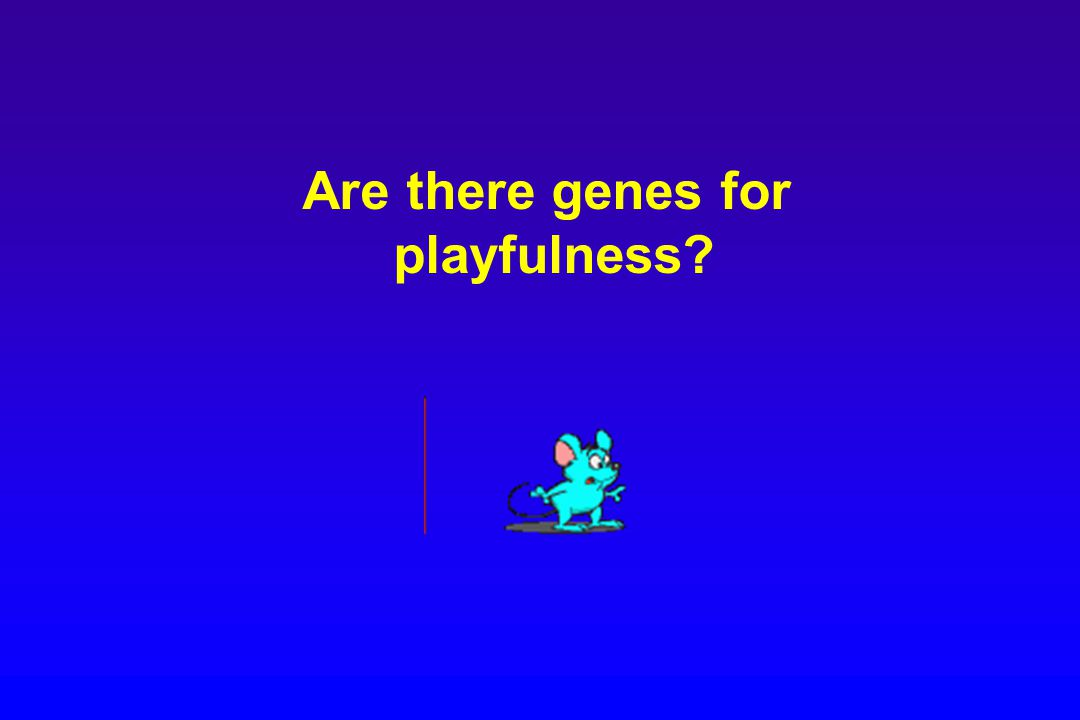 Are there genes for playfulness?