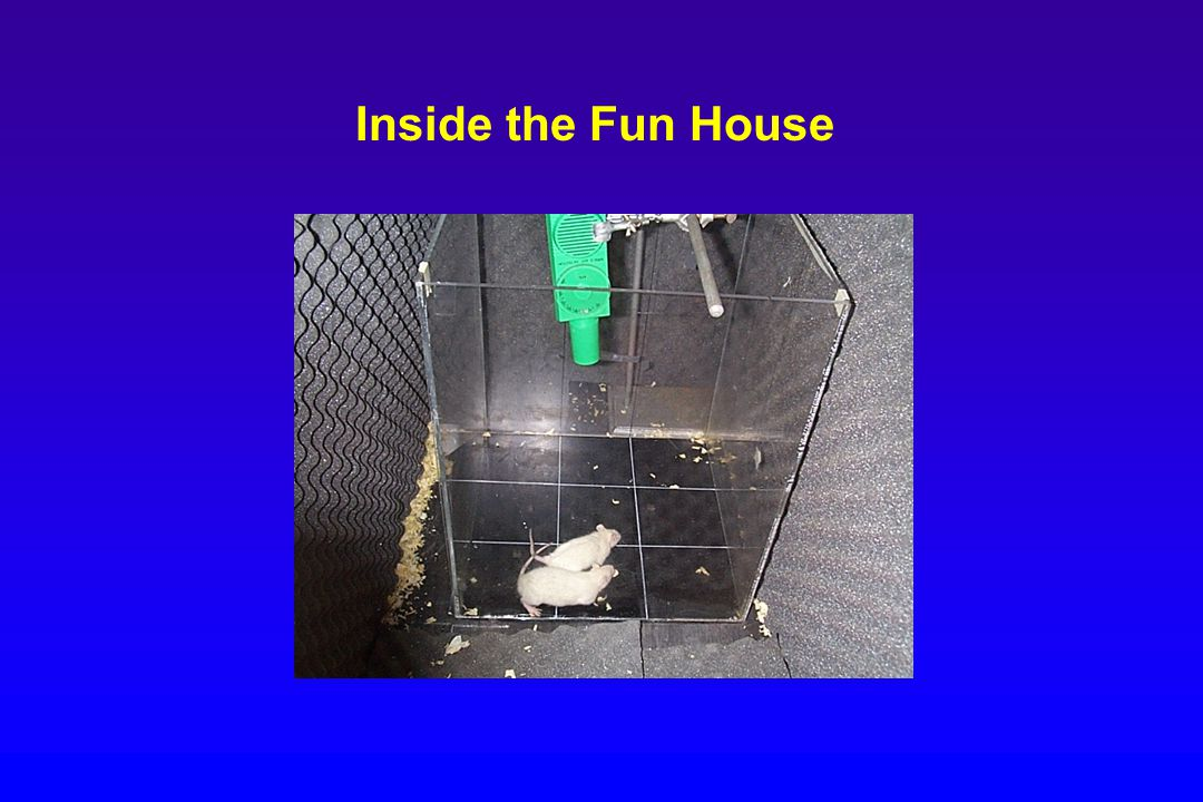 Inside the Fun House