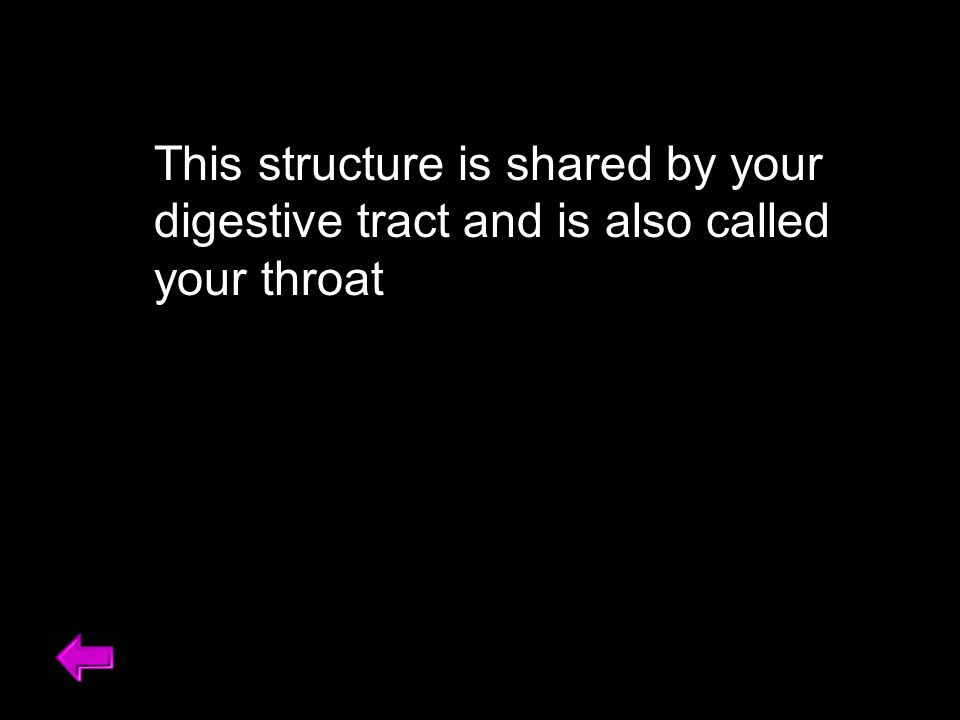 This structure is shared by your digestive tract and is also called your throat