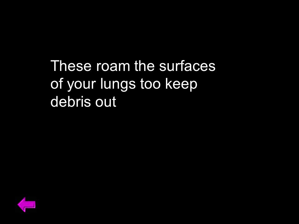 These roam the surfaces of your lungs too keep debris out