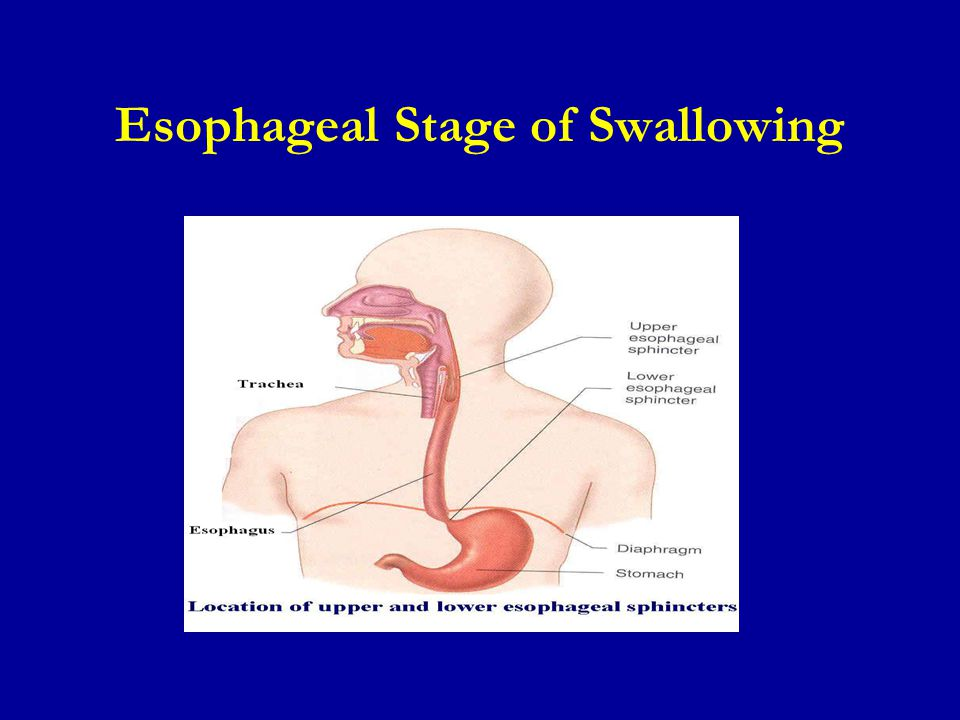 Esophageal Stage of Swallowing