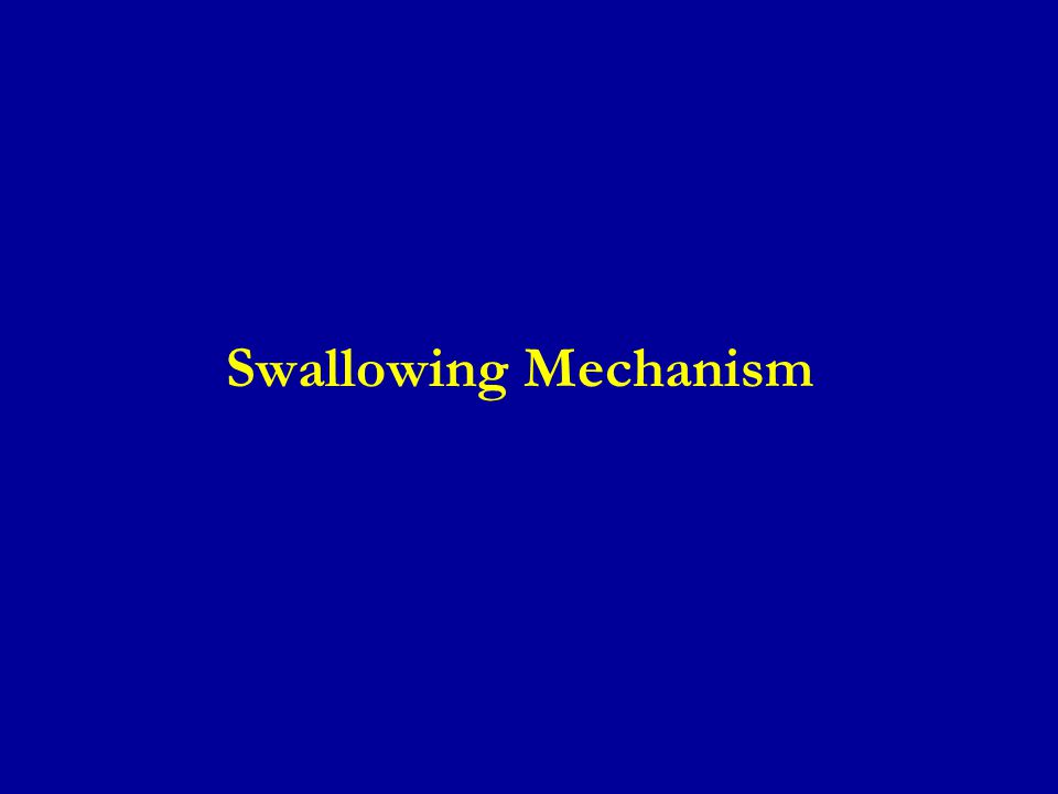 Ingestion of Food (continued) ● Esophageal Stage of Swallowing.