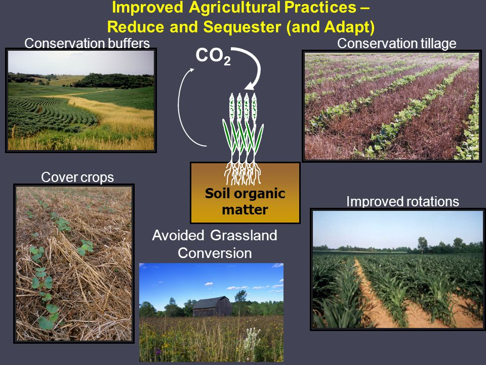 Improved Agricultural Practices – Reduce and Sequester (and Adapt) Conservation tillageConservation buffers Cover crops Improved rotations Soil organic matter CO 2 Avoided Grassland Conversion