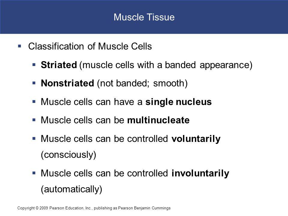 Copyright © 2009 Pearson Education, Inc., publishing as Pearson Benjamin Cummings Neural Tissue Figure 4–19 Neural Tissue.