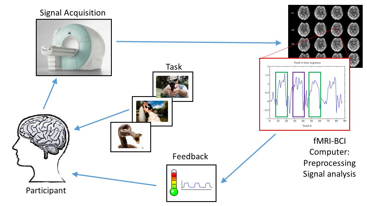 Neurofeedback Information about neural activity provided to subjects in real time to facilitate learned self-regulation  changes in brain fxn, cognition, behavior (Stoekel et al., 2014) rtfMRI-BCI BOLD in predetermined region of interest (ROI) Signal translated to visual cue Operant training to voluntarily regulate activation in ROI Clinical relevance (i.e.