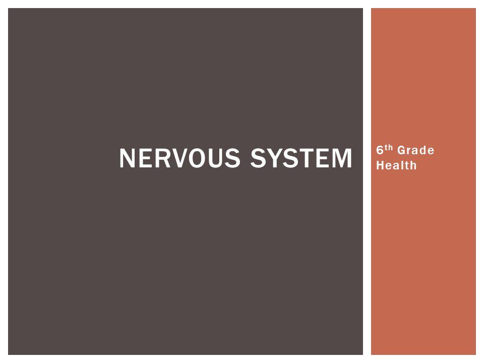 6 th Grade Health NERVOUS SYSTEM