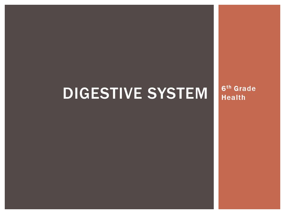 6 th Grade Health DIGESTIVE SYSTEM