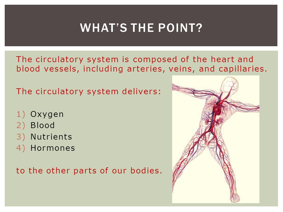 The circulatory system is composed of the heart and blood vessels, including arteries, veins, and capillaries. The circulatory system delivers: 1)Oxyg