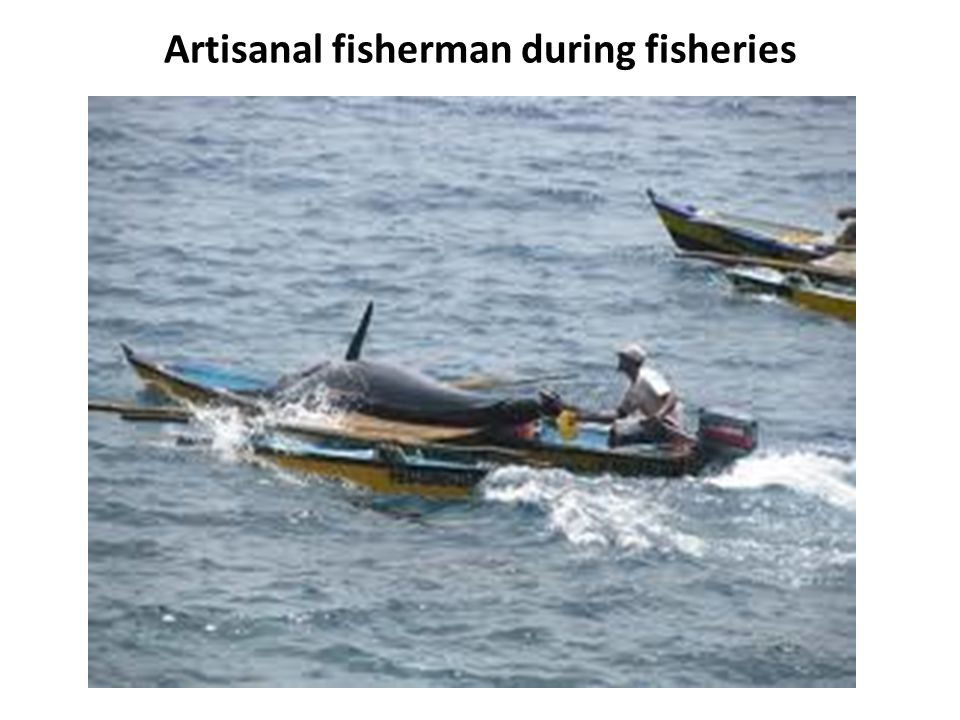 Artisanal fisherman during fisheries
