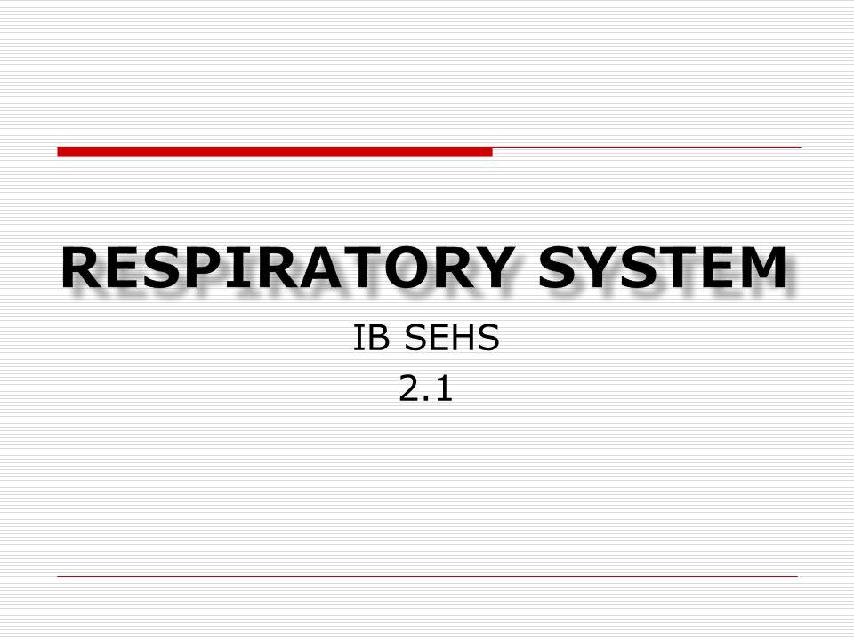 IB SEHS 2.1