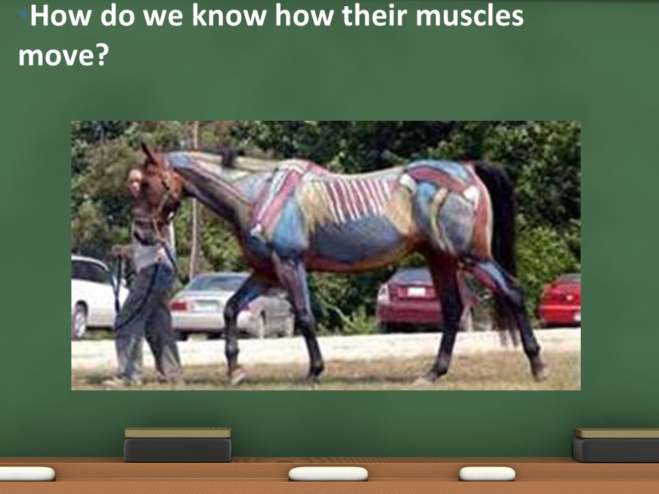 How do we know how their muscles move