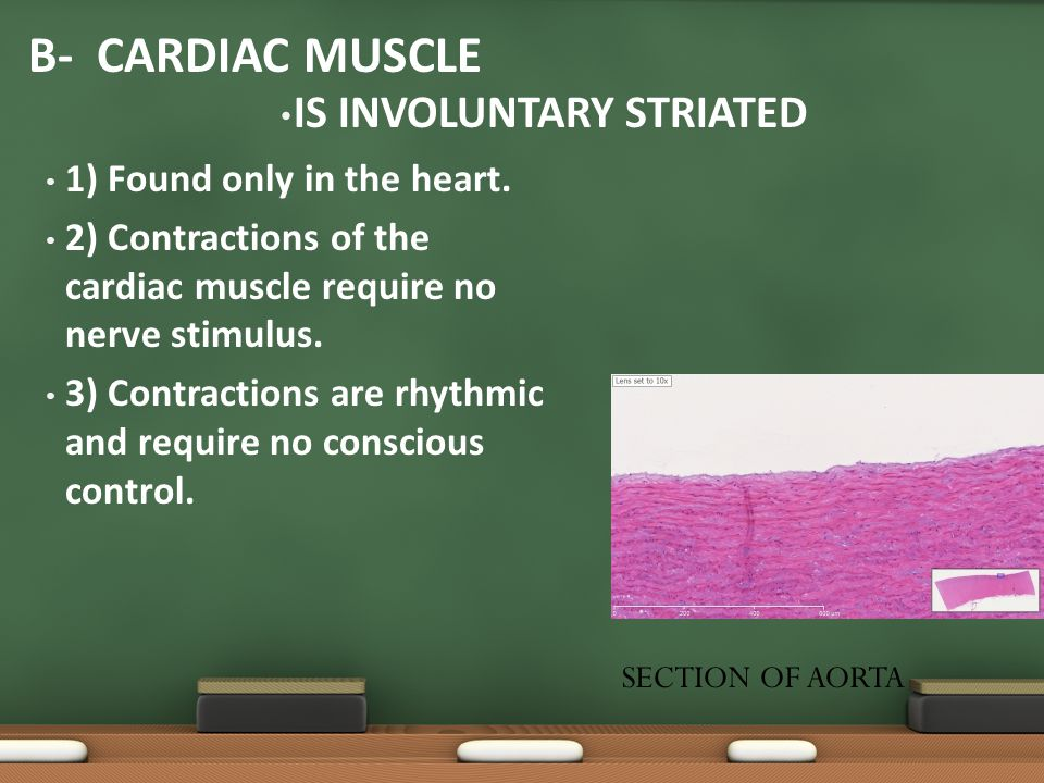 1) Found only in the heart. 2) Contractions of the cardiac muscle require no nerve stimulus. 3) Contractions are rhythmic and require no conscious con