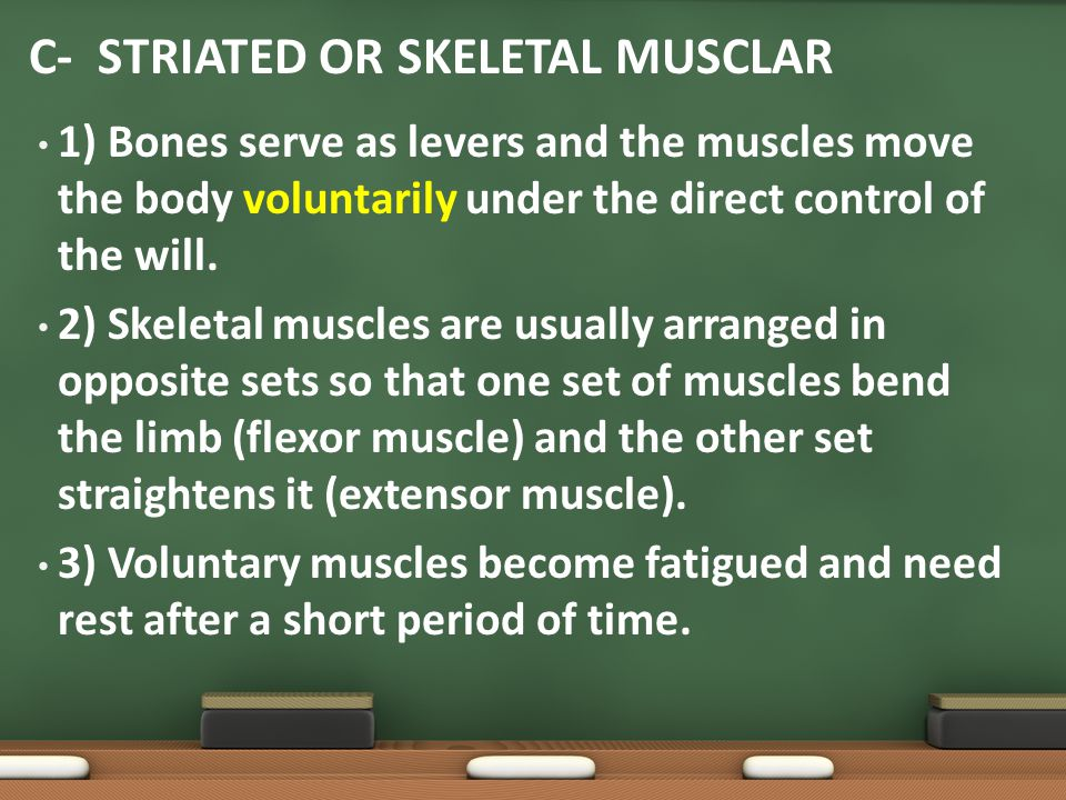 1) Bones serve as levers and the muscles move the body voluntarily under the direct control of the will. 2) Skeletal muscles are usually arranged in o