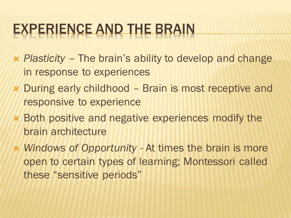  Plasticity – The brain's ability to develop and change in response to experiences  During early childhood – Brain is most receptive and responsive to experience  Both positive and negative experiences modify the brain architecture  Windows of Opportunity - At times the brain is more open to certain types of learning; Montessori called these sensitive periods