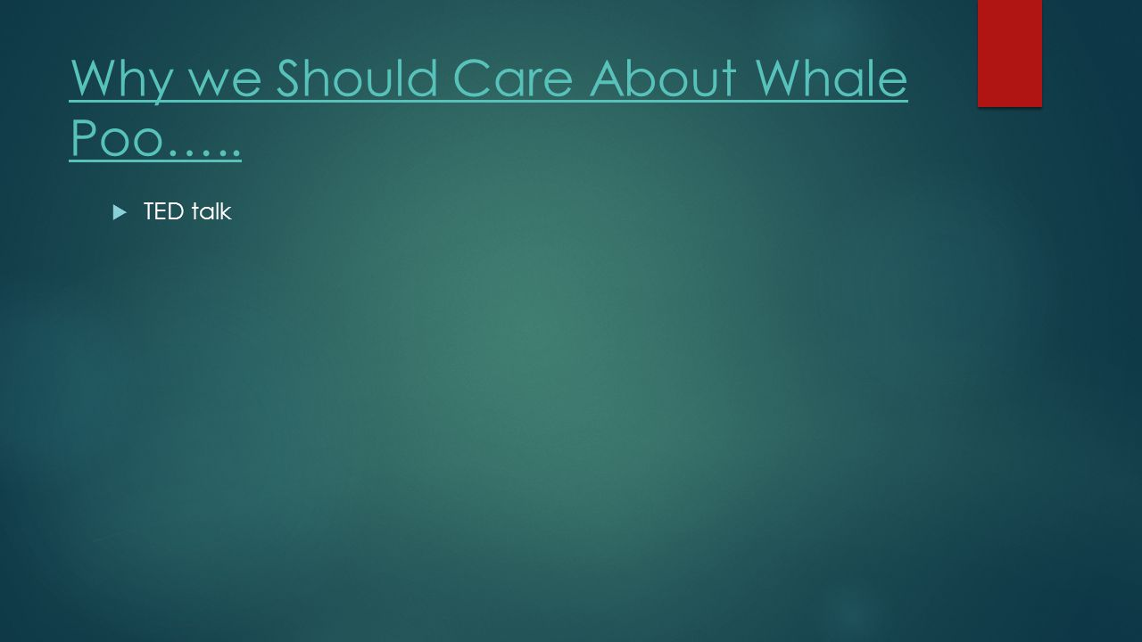 Why we Should Care About Whale Poo…..  TED talk