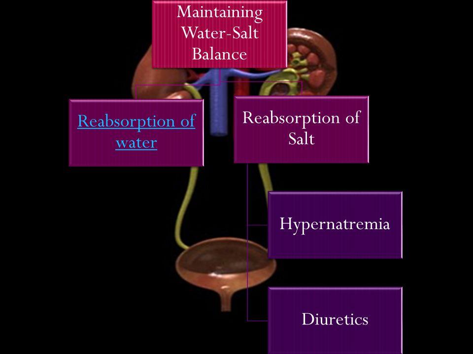 Maintaining Water-Salt Balance Reabsorption of water Reabsorption of Salt Hypernatremia Diuretics