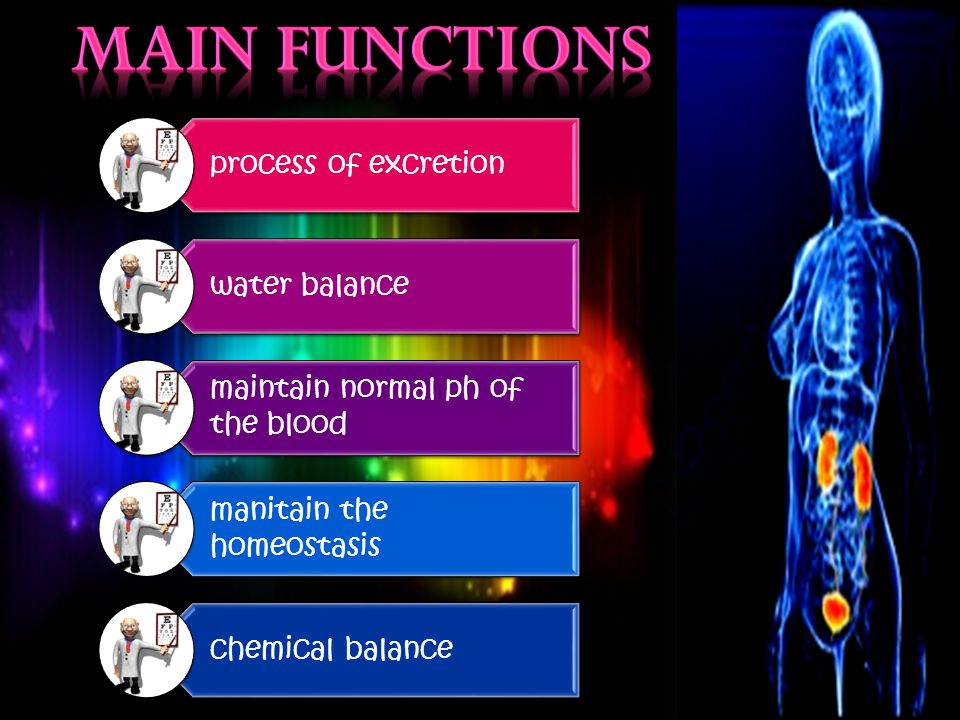 process of excretion water balance maintain normal ph of the blood manitain the homeostasis chemical balance