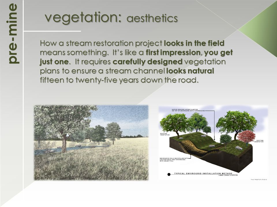 pre-mine vegetation: aesthetics How a stream restoration project looks in the field means something.