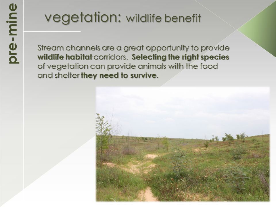 pre-mine vegetation: wildlife benefit Stream channels are a great opportunity to provide wildlife habitat corridors.