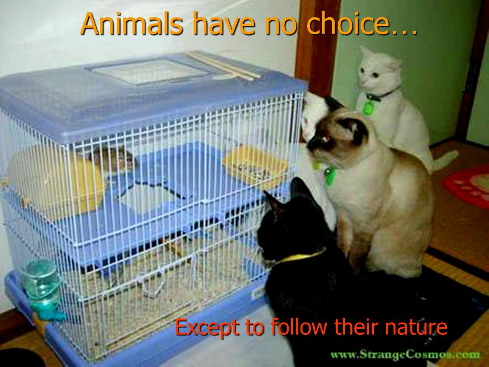 Animals have no choice … Except to follow their nature