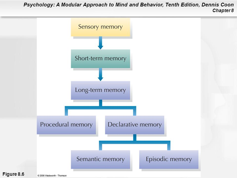 Psychology: A Modular Approach to Mind and Behavior, Tenth Edition, Dennis Coon Chapter 8 Figure 8.6