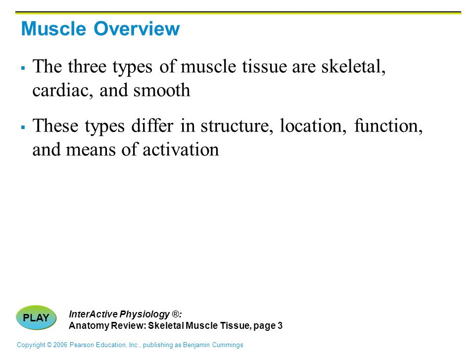 Copyright © 2006 Pearson Education, Inc., publishing as Benjamin Cummings Muscle Overview  The three types of muscle tissue are skeletal, cardiac, an