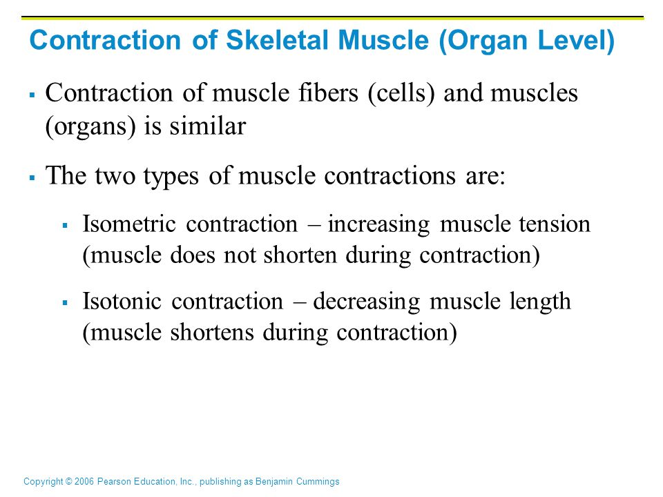 Copyright © 2006 Pearson Education, Inc., publishing as Benjamin Cummings Contraction of Skeletal Muscle (Organ Level)  Contraction of muscle fibers