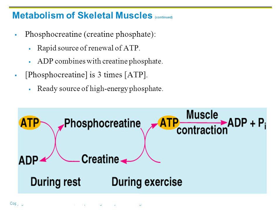 Copyright © 2006 Pearson Education, Inc., publishing as Benjamin Cummings Metabolism of Skeletal Muscles (continued)  Phosphocreatine (creatine phosphate):  Rapid source of renewal of ATP.