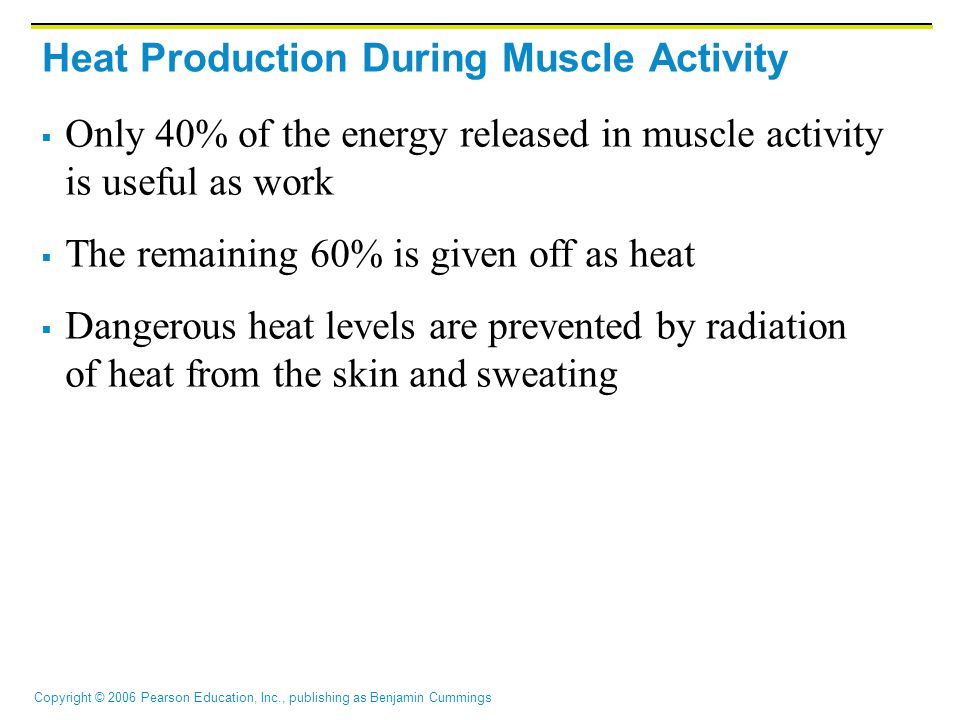 Copyright © 2006 Pearson Education, Inc., publishing as Benjamin Cummings Heat Production During Muscle Activity  Only 40% of the energy released in