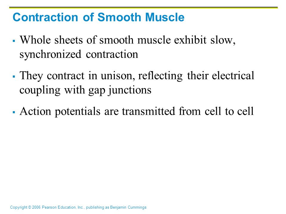 Copyright © 2006 Pearson Education, Inc., publishing as Benjamin Cummings Contraction of Smooth Muscle  Whole sheets of smooth muscle exhibit slow, s