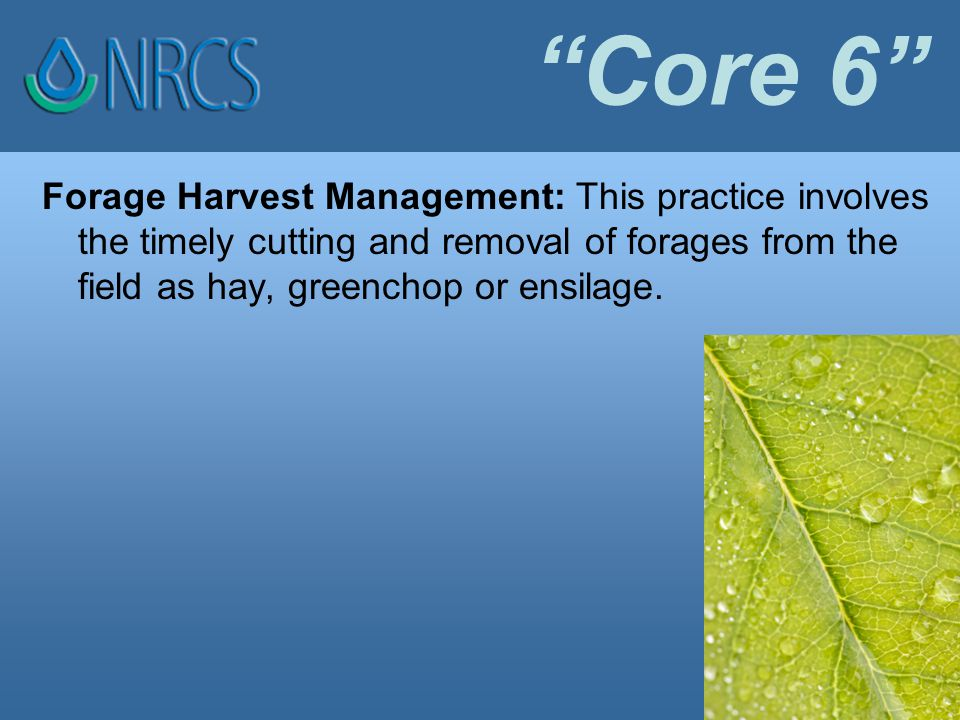 Core 6 Forage Harvest Management: This practice involves the timely cutting and removal of forages from the field as hay, greenchop or ensilage.