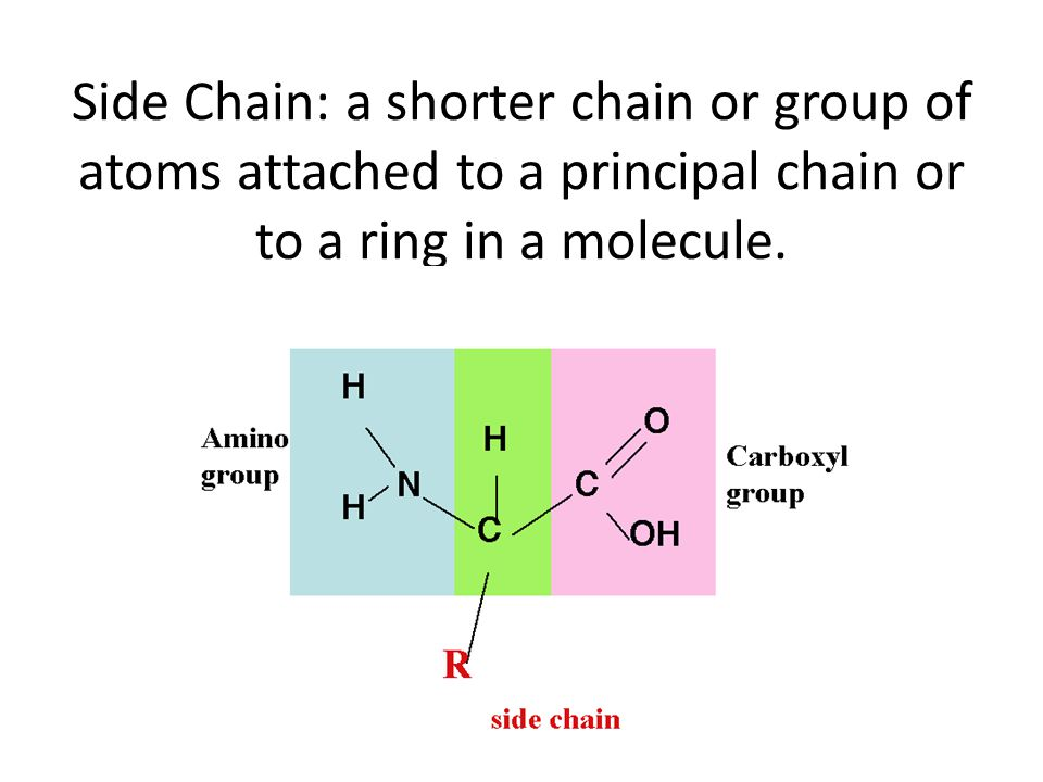 Side Chain: a shorter chain or group of atoms attached to a principal chain or to a ring in a molecule.
