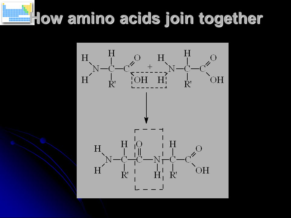 How amino acids join together