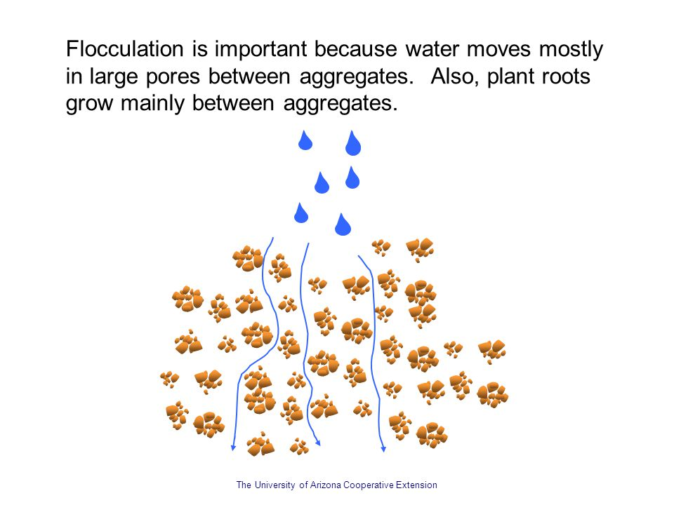 The University of Arizona Cooperative Extension Flocculation is important because water moves mostly in large pores between aggregates. Also, plant ro