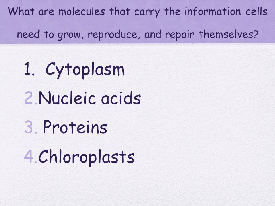 What are important because they carry out many of the activities of a cell? 1. Cytoplasm 2. Chloroplasts 3. Chlorophill 4. Proteins