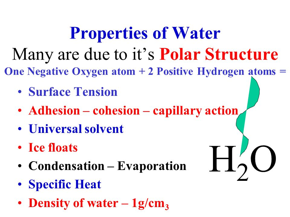 Properties of Water Many are due to it's Polar Structure One Negative Oxygen atom + 2 Positive Hydrogen atoms = Surface Tension Adhesion – cohesion – capillary action Universal solvent Ice floats Condensation – Evaporation Specific Heat Density of water – 1g/cm 3 H2OH2O