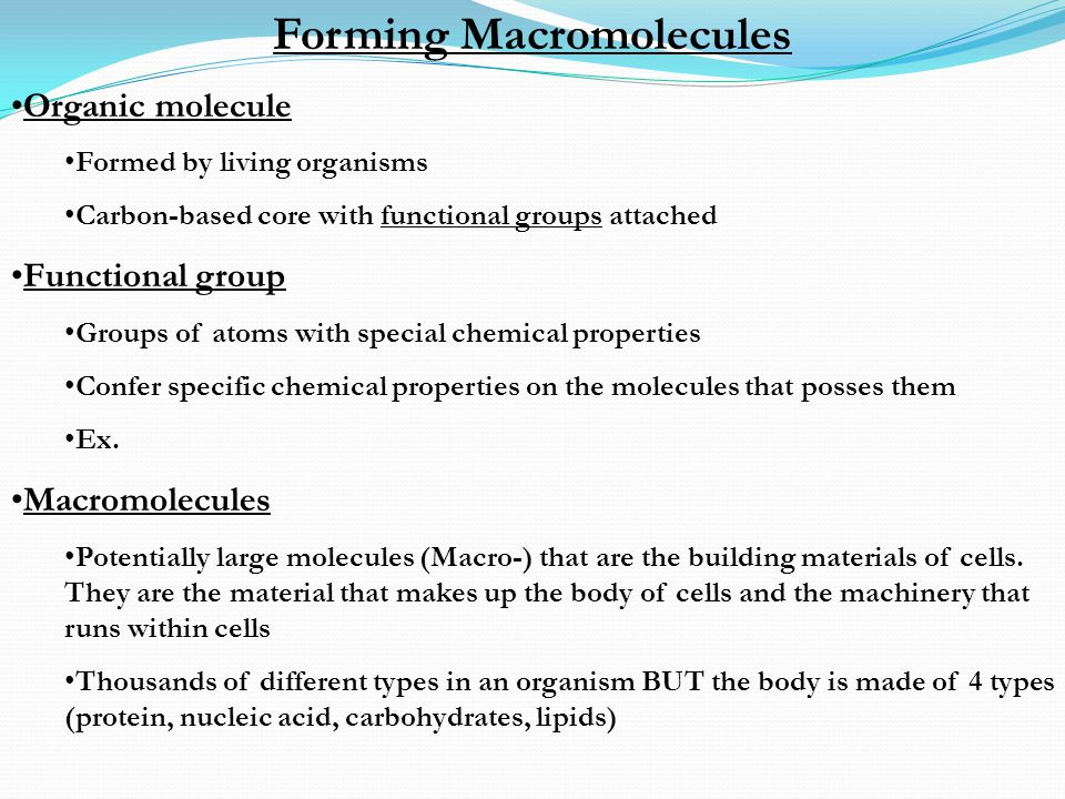 Forming Macromolecules Organic molecule Formed by living organisms Carbon-based core with functional groups attached Functional group Groups of atoms