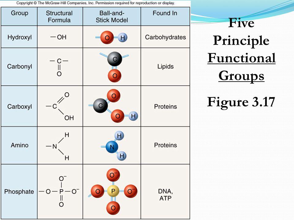 Five Principle Functional Groups Figure 3.17