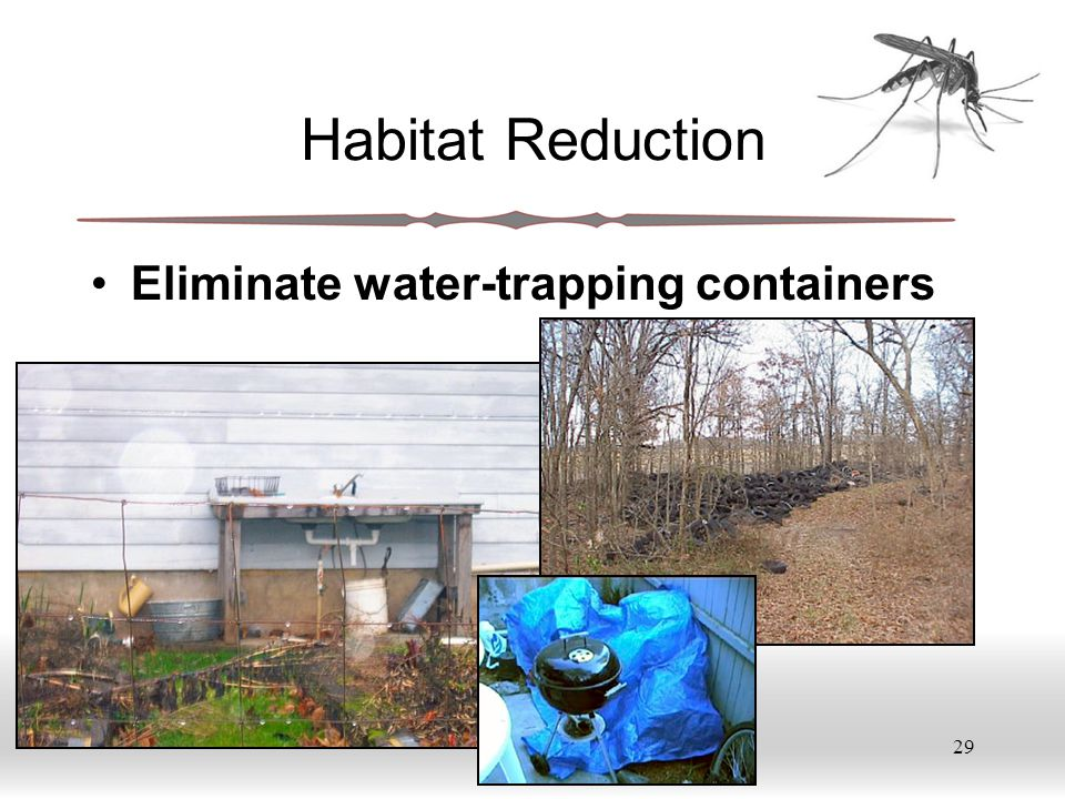 29 Habitat Reduction Eliminate water-trapping containers
