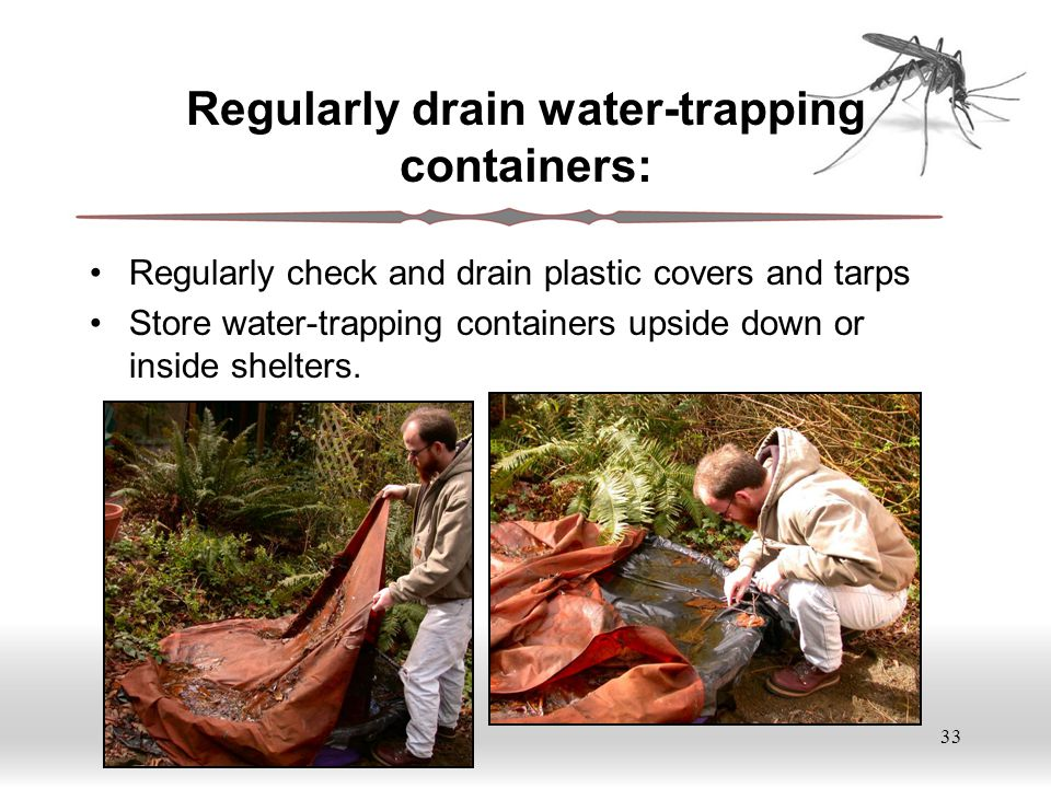33 Regularly drain water-trapping containers: Regularly check and drain plastic covers and tarps Store water-trapping containers upside down or inside shelters.